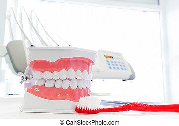 Clean teeth denture, dental jaw model and toothbrush in...