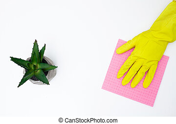 Cleaning company worker cares for a plant
