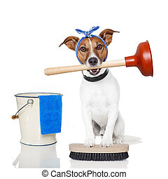 cleaning dog