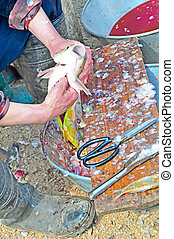 cleaning fish 1