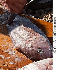 Cleaning fish dentex