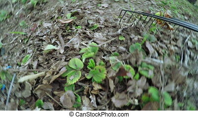 Cleaning leaves in nature - Camera attached to panicle and...