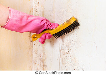 cleaning of room wall from mold with brush