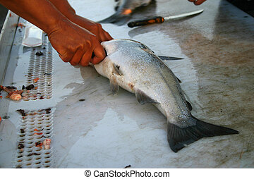 Cleaning Salmon