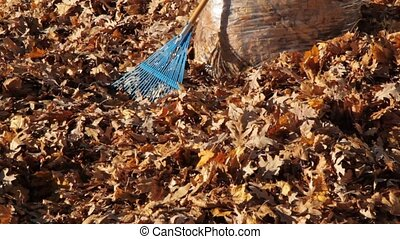 Cleaning up Autum Leaves with rake