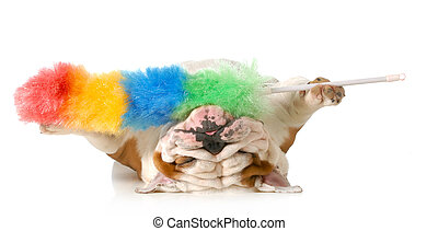 cleaning up dog hair - cleaning up after the dog - english...