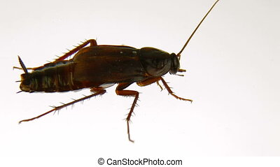 Cleanly Cockroach - Roach cleans the antenna