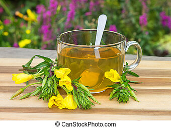 Clear cup of herbal tea from evening primrose. - Clear cup...