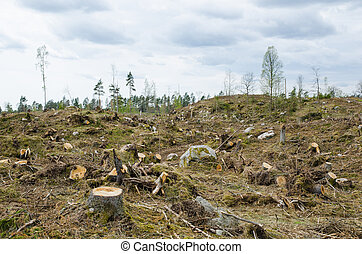 Clear cut forest area - Stumps at a clear cut forest area