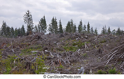 Clear Cut Forest on Cloudy Day