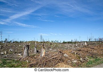 Clear cut forest