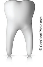 Clear Molar Tooth Isolated on white Background. Vector