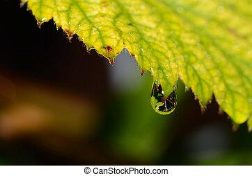 rain drops - clear rain drops after rain in summer with...