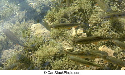 Clear shallow water with fish swimming. - Clear shallow ...