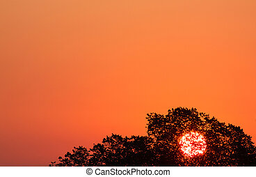 sky background with sun rising behind trees