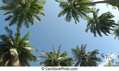 Clear Sky through Tropical Palm Fronds in the Maldives -...