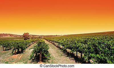 Clear Sky Vineyard - Beautiful scenic vineyard with clear...