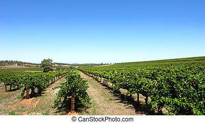 Clear Sky Vineyard - Scenic Vineyard on a clear day in the...