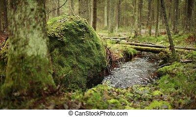clear stream runs a large stone
