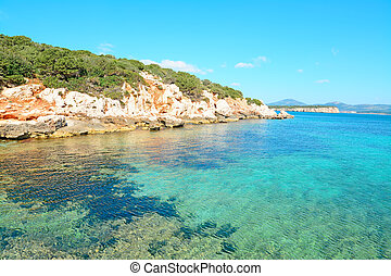 clear water and rocky shore