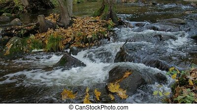 Clear Water Creek Streaming Through Autumn Forest With Yellow Leaves