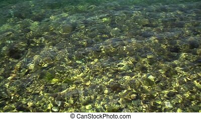 Clear water in the sea, stones in moss on the shore.