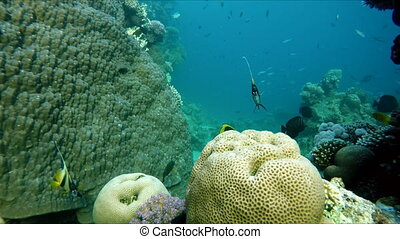 Clear water. Underwater adventure.