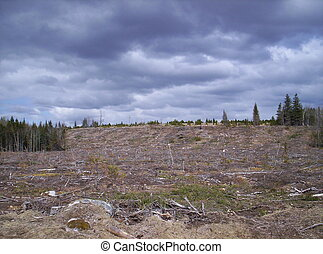 Clearcut sky clouds