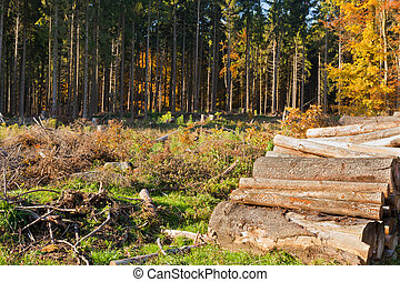 Clearcut Timber and Logpile - Renewable resource forest:...