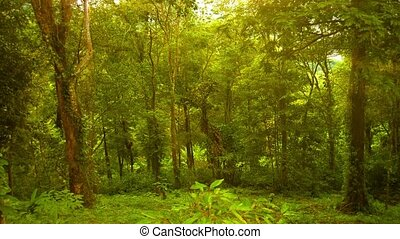 Cleared rainforest. Thailand, Phuket - Video 1080p - Cleared...