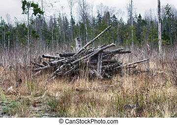 clearfell, bosque, waste;, residues, boreal, tala