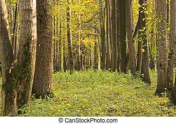 Green clearing in autumn forest soft focus photo
