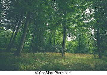 Clearing in a green forest