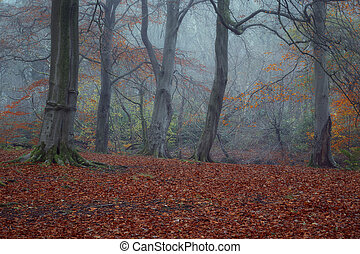 Clearing in the foggy woods in autumn