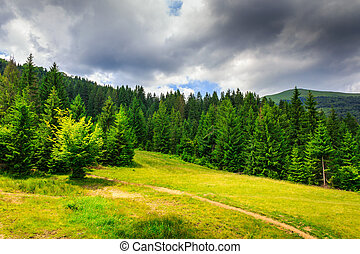 clearing with footpath in a mountain forest before the...
