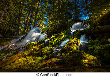 Clearwater Falls Umpqua National Forest - Clearwater Falls...