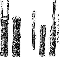 Cleft grafting, vintage engraving. Old engraved illustration...