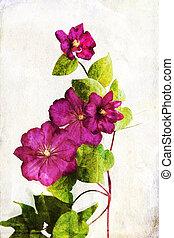 clematis, watercolored, 深紅色