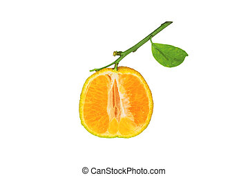 Clementine isolated on white background