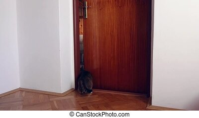 cat jumps on door handle - Clever cat jumps on door handle...