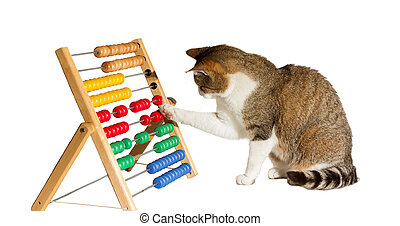 Clever cat mathematician - Conceptual image of a clever cat...