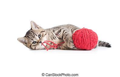 clew, 隔離された, 子ネコ, 白, 遊び, 赤