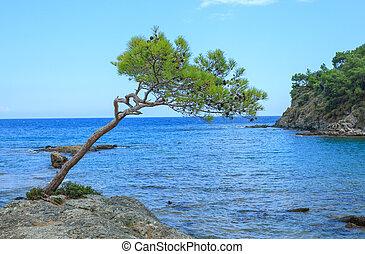 cliff, phaselis, hav, fyrre, grows