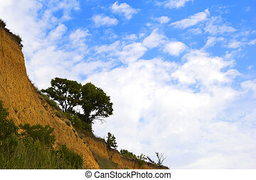cliff with tree