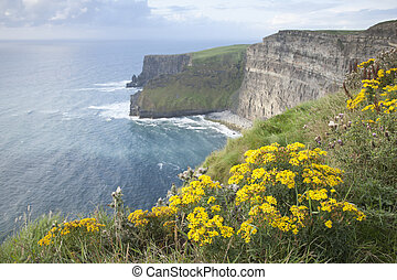 Cliffs of Moher; Clare