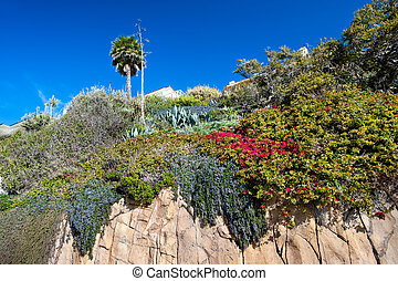 Cliffside flowers - A cliff of sandstone along Laguna Beach...