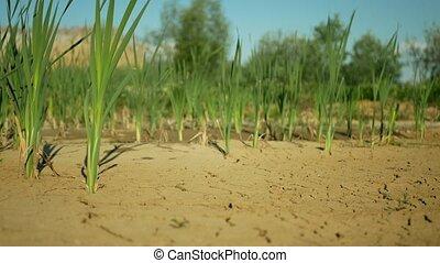 climat, wetland, changement, mort, très, sécheresse, toqué, ...