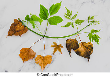climate change and solutions to global warming conceptual still-life, green lush branch with healthy leaves vs dead dry leaves