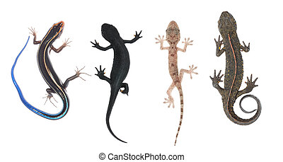 climb animal collection set, lizard skink gecko salamander ...