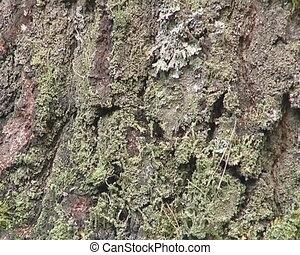 Climbing on tree trunk.